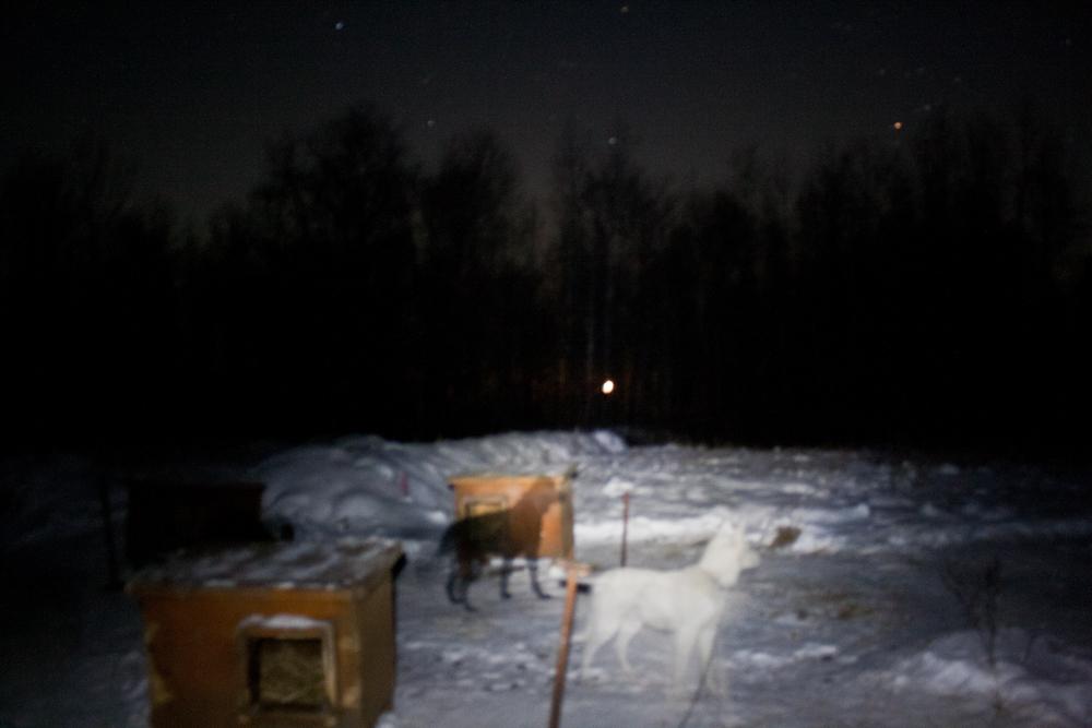 husky farm 19
